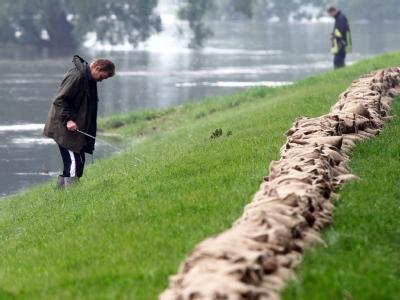 Ein Deichläufer prüft die Festigkeit des Deichs in der Nähe der brandenburgischen Ortschaft Neuzelle (Oder-Spree).