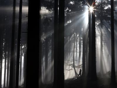 Der Zustand der Wälder in Deutschland hat sich verbessert.