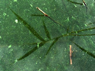Ostseeurlauber können aufatmen: Die Messergebnisse in den küstennahen Ostseegewässern sind unauffällig.
