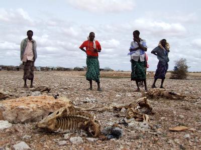 Somalische Hirten, die ihren gesamten Viehbestand wegen anhaltender Trockenheit verloren haben, betrachten die Kadaver der Tiere.