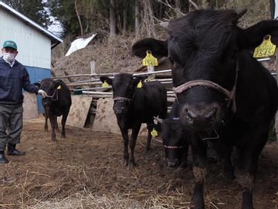 Rinder in Japan
