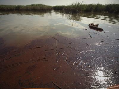 Öl an der Küste von Louisiana