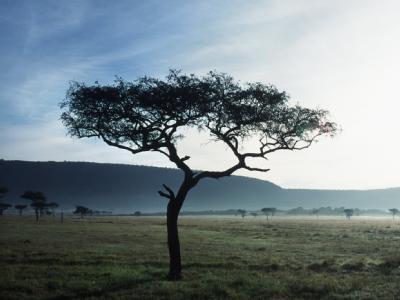 Massai Mara in Kenia