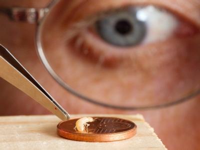 Hier sitzt eine Termite zu wissenschaftlichen Zwecken auf einer Geldmünze - in Indien haben Termiten in einer der größten Banken des Landes Geldscheine im Millionenwert gefressen.
