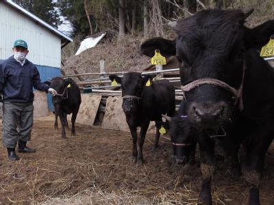Ein japanischer Bauer füttert seine Kühe (Archivbild).