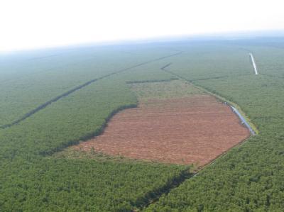 Fluch des Biotreibstoff-Booms