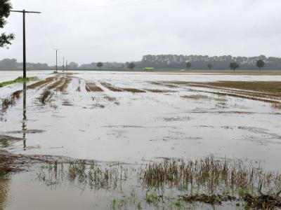 Überschwemmtes Feld