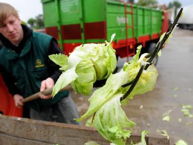 Bauern werfen tonnenweise Gem�se weg