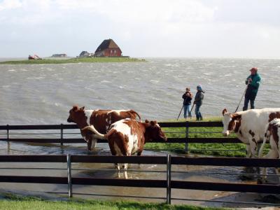 Meeresspiegel steigt schneller