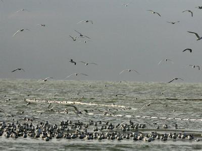 Vogelkolonie vor Breton Sound Island.