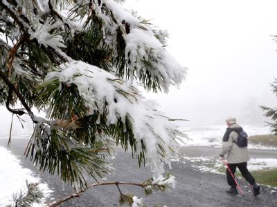 Neuschnee auf dem Ettelsberg in Nordhessen auf den Zweigen einer Kiefer.