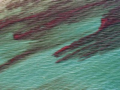 Seit nunmehr drei Wochen sprudelt Öl in den Golf von Mexiko.