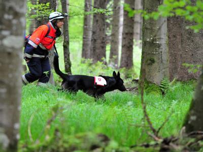 Ein Rettungshund stöbert bei Heidenheim-Nietheim mit seiner Führerin durch den Wald.