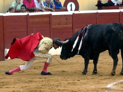 Tierschützer fordern die Abschaffung von Stierkämpfen.