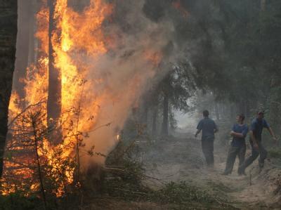 Feuerwehrmänner weichen in einem Waldstück vor den Flammen zurück.