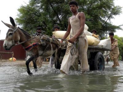 Flutopfer verlassen ihre Dörfer in der überfluteten Provinz Punjab. In Pakistan sind inzwischen 20 Millionen Menschen auf der Flucht vor dem Wasser.