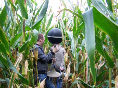 Die Technik für Schalltests wird in einem Maisfeld in der Nähe des Klosters Mariendonk nordöstlich des nordrhein-westfälischen Grefrath aufgestellt. Foto:Polizei Mönchengladbach