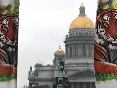 «Tigergipfel» in St.Petersburg