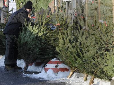 Verkauf von Weihnachtsbäumen