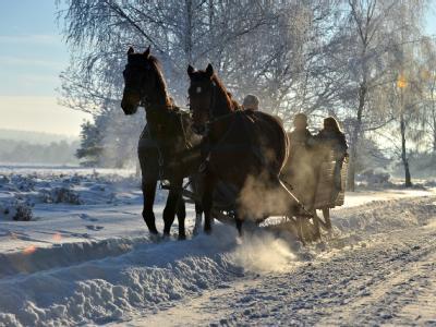 Pferdeschlittenausflug in der Heide