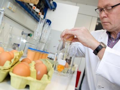 Eier im Labortest: Dioxin soll über verseuchtes Futter auf viele Bauernhöfe in mehreren Bundesländern gelangt sein.
