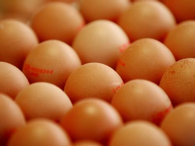 Die Dioxinfunde in Tierfutter und Eiern beschäftigen weiter Verbraucher, Justiz, Politiker und Ernährungsexperten.