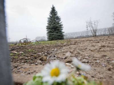 Wenn Gras über die Atomkraft wächst