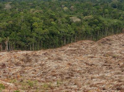 Der Erde droht bis zum Jahr 2050 ein Verlust von 230 Millionen Hektar Waldfläche. (Archivbild)