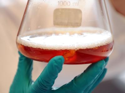Forscher im Niedersächsischen Landesamt für Verbraucherschutz und Lebensmittelsicherheit (LAVES) in Oldenburg untersuchen eine Probe aus Tomatenstücken.