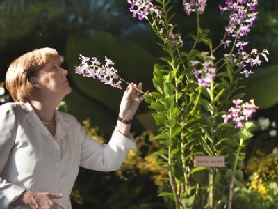 Bundeskanzlerin Merkel (CDU), hier im Orchideengarten in Singapur, muss sich heftige Kritik aus der eigenen Partei anhören.