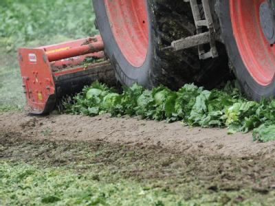 EHEC-Krise: Einnahmeausfälle bei Gemüsebauern