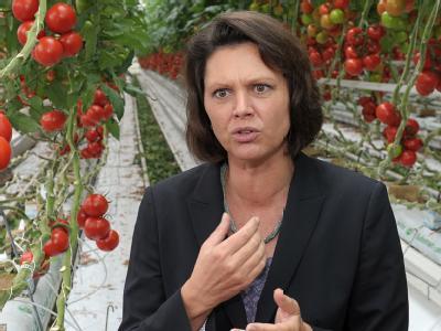 Bundeslandwirtschaftsministerin Ilse Aigner beim Besuch eines Tomaten-Anbaubetriebes.