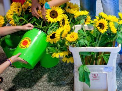 Atomkraft? Nein Danke: Sonnenblumen werden Delegierten beim Landesparteitag von Bündnis 90/Die Grünen am Freitag (17.06.2011) in Dresden gegossen.