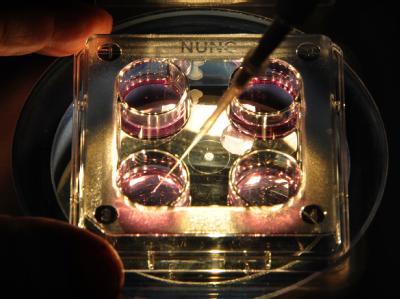 Kulturgefäße für Embryonen