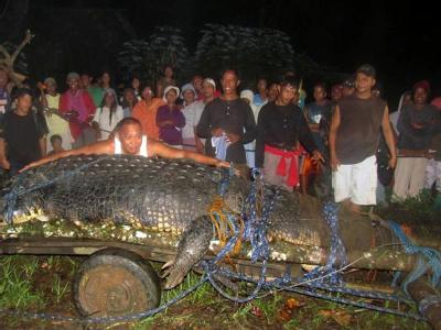 Riesen-Krokodil
