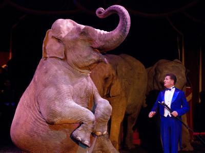 Bereits seit Jahren kämpfen Tierschützer für ein Verbot von Wildtieren im Zirkus. Foto: Friso Gentsch