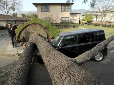 Ein großer Baum ist im kalifornischen Arcadia aus dem Boden gerissen worden. Foto: Paul Buck