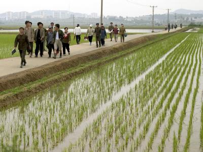 Misswirtschaft hat das an Bodenschätzen reiche Land ruiniert. Foto: Adrian Bradswaw/ Archiv.