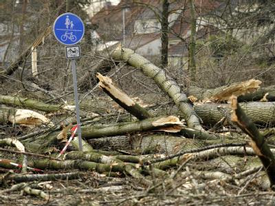 Umgestürzte Bäumen blockieren die Bundesstraße 224 in Bottrop. Foto: Marius Becker