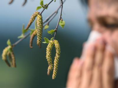Pollenbelastung steigt