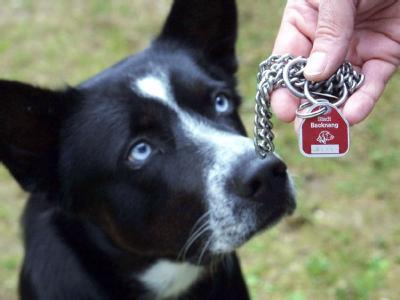 Ein Hundehalter zeigt in Backnang im Rems-Murr-Kreis die Steuermarke seines Hundes. Foto: Harry Melchert
