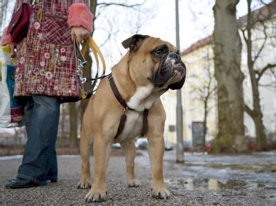 Rheinland-Pfalz plant einen freiwilligen Tierführerschein für Halter von Hunden und Exoten Foto: Peter Kneffel/Archiv