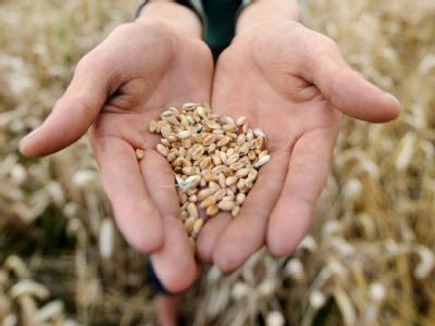 Eingelagert werden Weizen, Roggen und Hafer, um etwa bei Natur- oder Umweltkatastrophen Mehl für die Versorgung mit Brot herzustellen. Foto: Julian Stratenschulte/Archiv