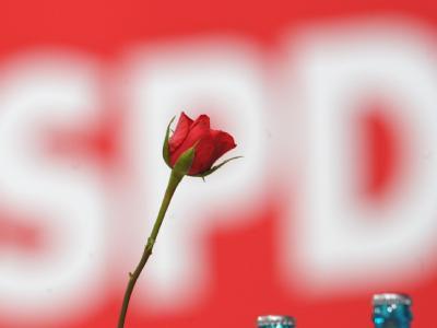 Eine Rose für die Partei