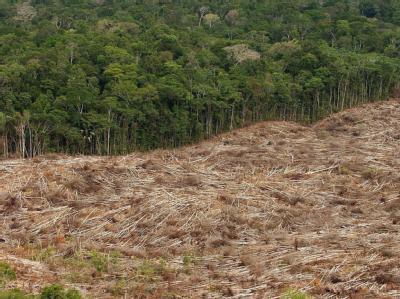 Abholzung des Regenwalds im Amazonasgebiet in Brasilien.