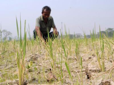 Ausgetrocknetes Reisfeld  in Guwahati im Nordosten Indiens.