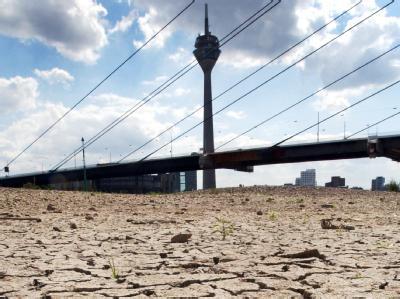 So könnte es künftig öfter aussehen: Das ausgetrocknete Rheinufer in Düsseldorf (Archivfoto vom 16.7.2003).