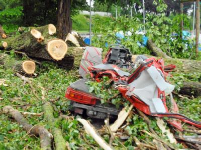 Dieser umgestürzte Baum forderte in Romanshorn im Kanton Thurgau ein Todesopfer: Ein 31-jähriger Mann wurde in seinem Auto erschlagen.
