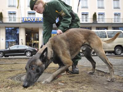 Eine Polizistin mit ihrem Spürhund sucht während der Sicherheitskonferenz, vor dem Hotel