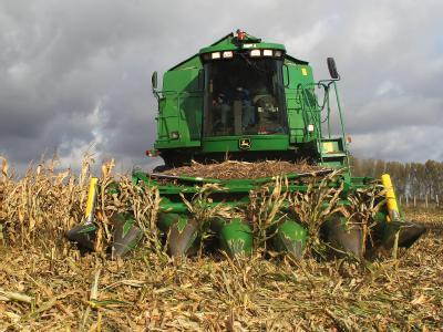 Unter anderem wird Mais zur Herstellung von Biosprit eingesetzt (Archivbild).